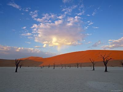 Red dunes and dead acacia tree, Dead Vlei, Namib-Naukluft-Sossusvlei, Namibia-Gavin Hellier-Photographic Print
