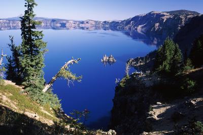 Red Elderberry (Sambucus Racemosa) with Phantom Ship Island in Crater Lake--Photographic Print