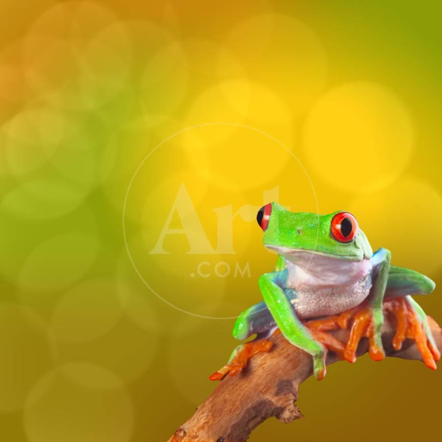 Red Eyed Tree Frog From Costa Rica Rain Forest Photographic Print by ...