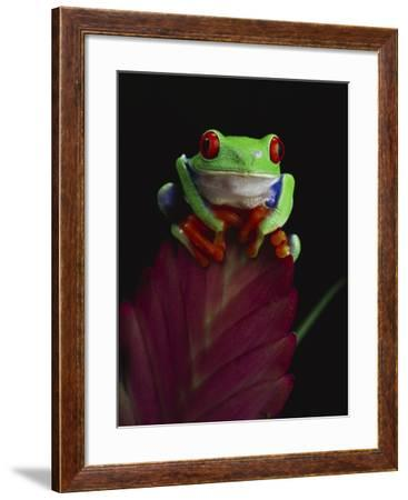 Green Tree Frog Mouse Pad Personalize Gifts Any Name Or Text In Any Color Frogs