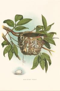 Red-Eyed Vireo Nest and Eggs