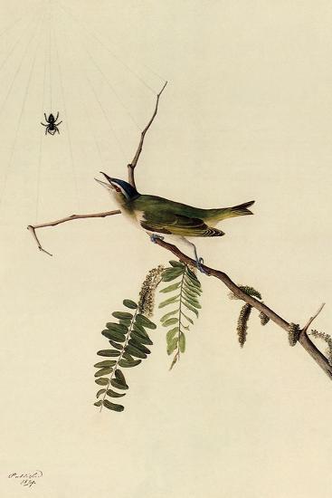 Red-Eyed Vireo-John James Audubon-Giclee Print