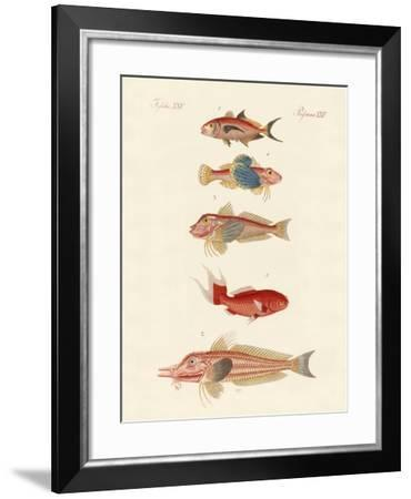 Red Fish--Framed Giclee Print