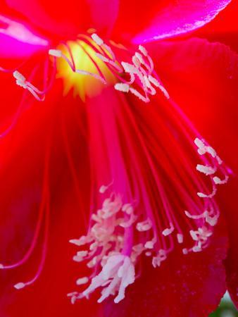 https://imgc.artprintimages.com/img/print/red-flower-closeup_u-l-q1aven90.jpg?p=0