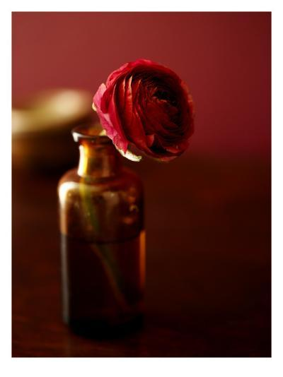 Red Flower in Glass Jar--Photo