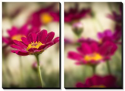 Red Flower Petal-Marco Carmassi-Canvas Art Set