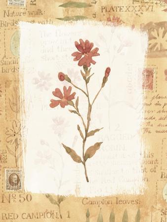 https://imgc.artprintimages.com/img/print/red-flower_u-l-pyludv0.jpg?p=0