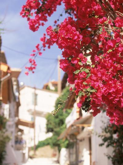 Red Flowers, Epirus, Greece-Walter Bibikow-Photographic Print