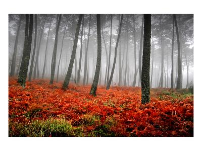 Red Flowers in a Foggy Forest--Art Print