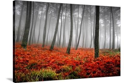 Red Flowers in a Foggy Forest--Stretched Canvas Print
