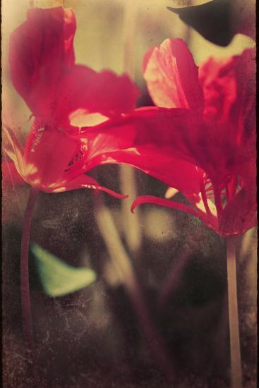 Red Flowers-Mia Friedrich-Photographic Print