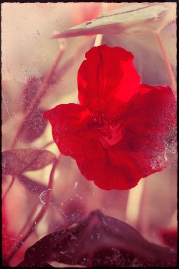 Red Flowers-Mia Friedrich-Photographic Print
