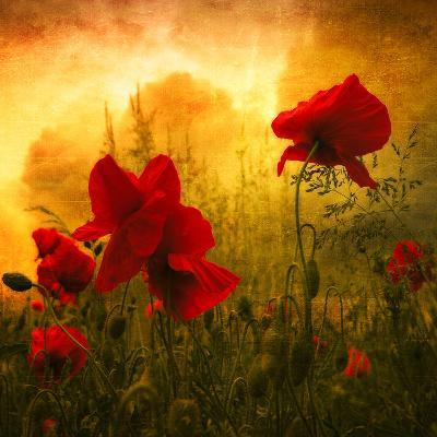 Red for Love-Philippe Sainte-Laudy-Photographic Print