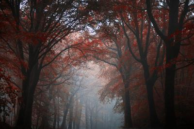 Red Forest-Philippe Manguin-Photographic Print