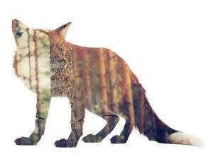 Red Fox in the Forest or Vice Versa