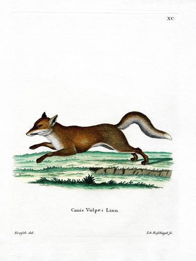 Red Fox--Giclee Print