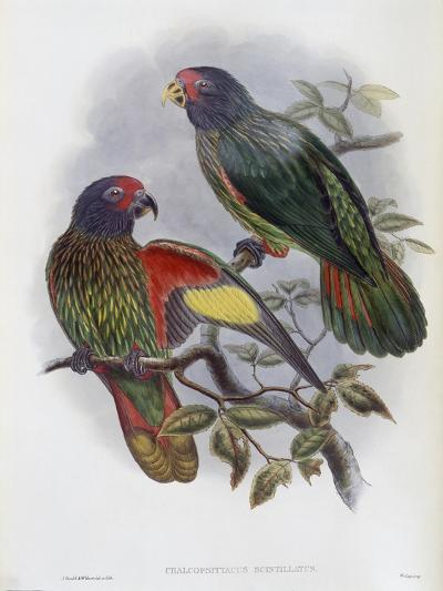 Red Fronted Lory-John Gould-Giclee Print