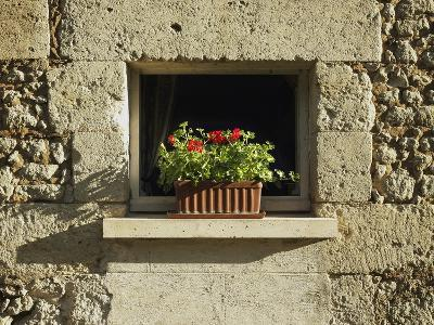 Red Geraniums on a window sill--Photographic Print