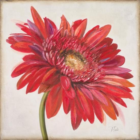 Red Gerber Daisy-Patricia Pinto-Premium Giclee Print