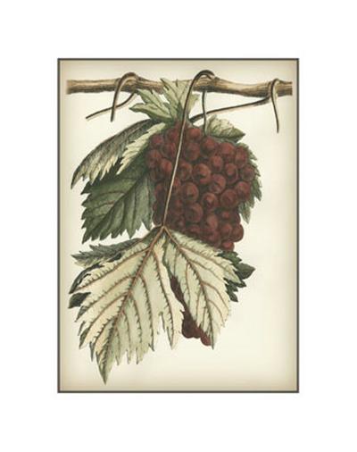 Red Grapes I--Art Print
