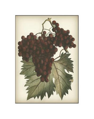 Red Grapes II--Art Print