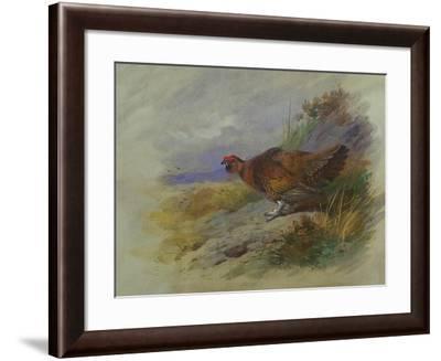 Red Grouse-Archibald Thorburn-Framed Giclee Print