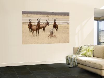 Red Hartebeest, Etosha National Park, Namibia, Africa-Wendy Kaveney-Wall Mural