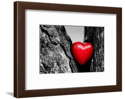 Red Heart in a Tree Trunk. Romantic Symbol of Love, Valentine's Day. Black and White with Red.-Michal Bednarek-Framed Photographic Print