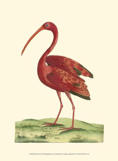 Red Ibis-Frederick P^ Nodder-Art Print