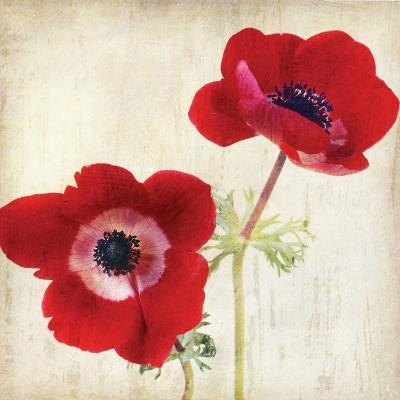 Red II-Amy Melious-Art Print