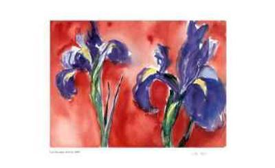 Red Iris-Lynn Donoghue-Collectable Print