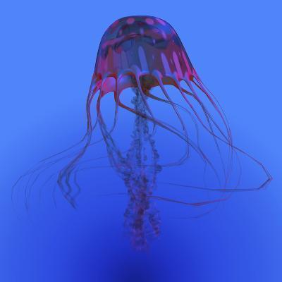 Red Jellyfish Illustration-Stocktrek Images-Art Print