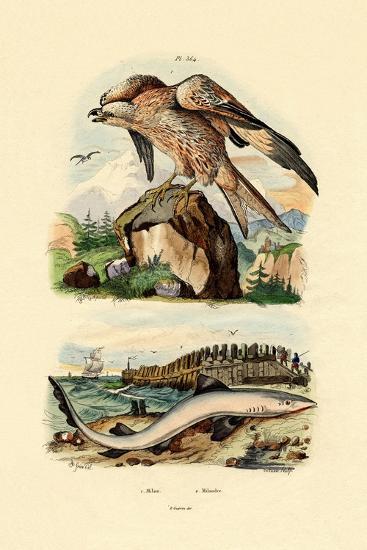 Red Kite, 1833-39--Giclee Print