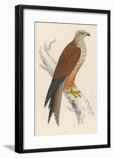 Red Kite-Reverend Francis O. Morris-Framed Giclee Print