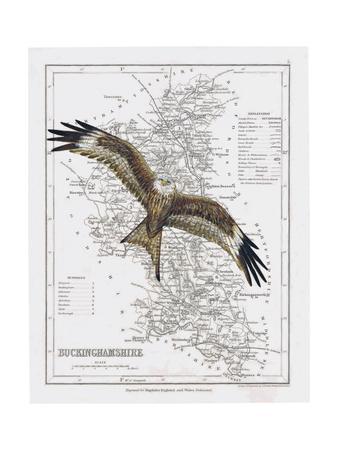 https://imgc.artprintimages.com/img/print/red-kite_u-l-pymenk0.jpg?artPerspective=n