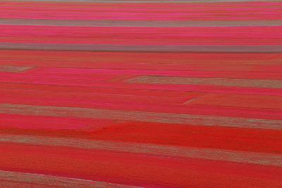 Red Land-Marco Carmassi-Photographic Print