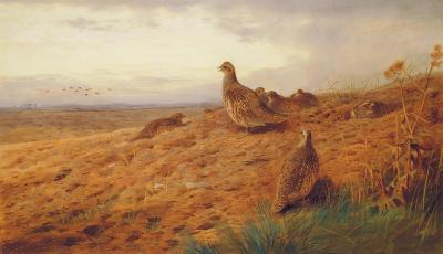 Red-Legged Partridge-Archibald Thorburn-Premium Giclee Print