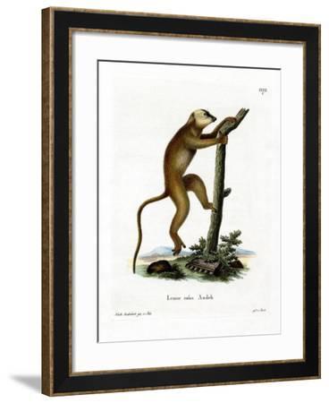 Red Lemur--Framed Giclee Print