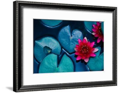 Red Lotus Water Lily Blooming on Water Surface and Dark Blue Leaves Toned, Purity Nature Background--Framed Photographic Print