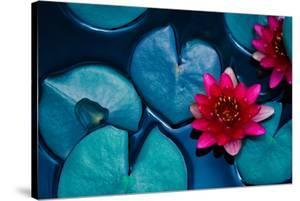 Red Lotus Water Lily Blooming on Water Surface and Dark Blue Leaves Toned, Purity Nature Background