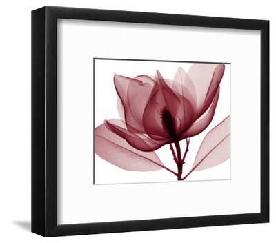 Red Magnolia I-Steven N. Meyers-Framed Art Print