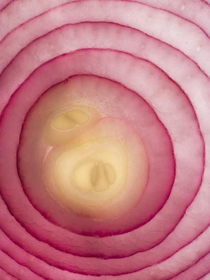 Red Onion-Greg Elms-Photographic Print