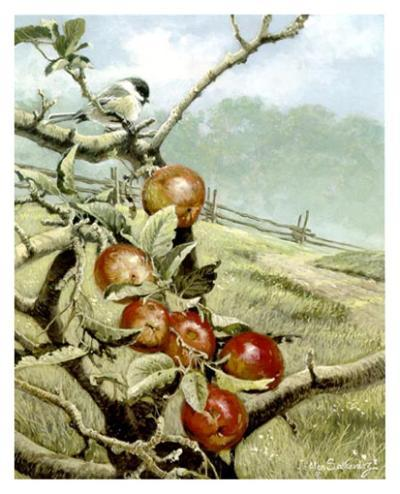 Red Orchard-Alan Sakhavarz-Art Print