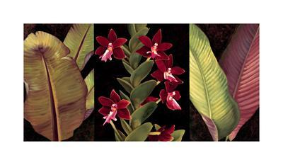 https://imgc.artprintimages.com/img/print/red-orchids-and-palm-leaves_u-l-f7m4gu0.jpg?p=0