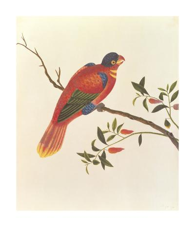Red Parrot--Premium Giclee Print