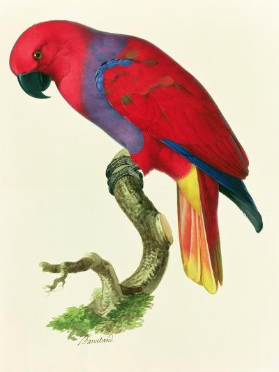 Red Parrot-Jacques Barraband-Giclee Print