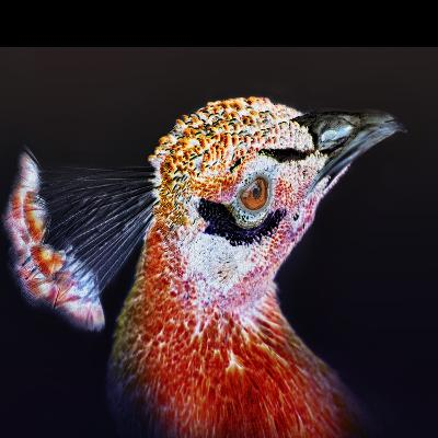 Red Peacock-Dee Smart-Photographic Print