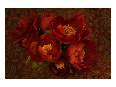 Red Peonies I-Judy Stalus-Art Print