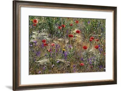 Red Poppies and Wildflowers-Paul Souders-Framed Photographic Print