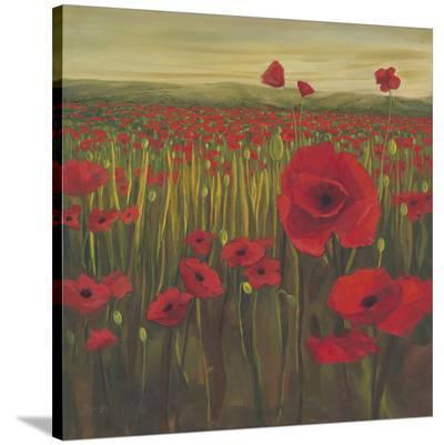 Red Poppy Sunrise--Stretched Canvas Print